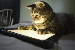 cat+and+tablet